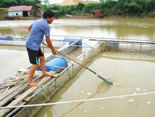 Kỹ thuật nuôi cá trong hệ thống VAC
