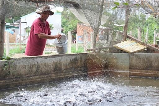 Nuôi thủy sản trong bể xi măng, nên nuôi loại nào để có hiệu quả tốt nhất?
