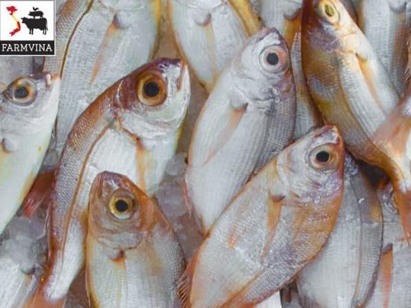 Những loại thủy sản dễ nuôi phù hợp với người mới bắt đầu