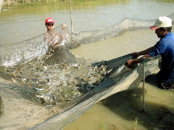 Giải pháp nuôi thủy sản thích ứng hạn, mặn