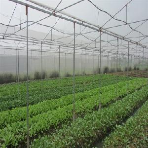 Kỹ thuật trồng và chăm sóc một số cây cải ăn lá ngắn ngày