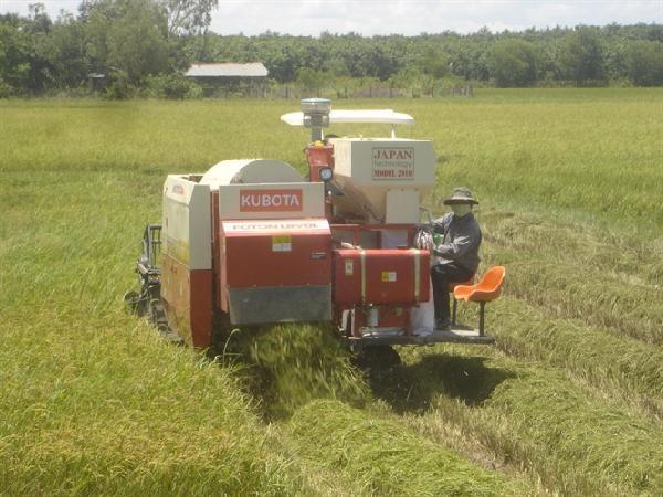 Thiếu gạo để bán, nhiều doanh nghiệp không dám ký hợp đồng XK mới