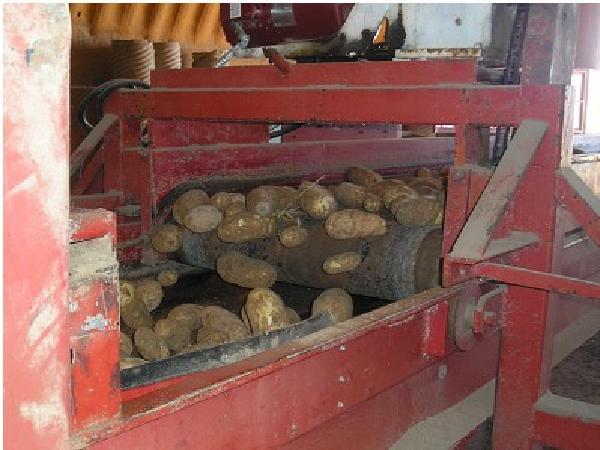 SB-Phương pháp ngăn chặn sự lây nhiễm một số bệnh trên cây khoai tây thông qua làm sạch và khử trùng dụng cụ, thiết bị tích trữ