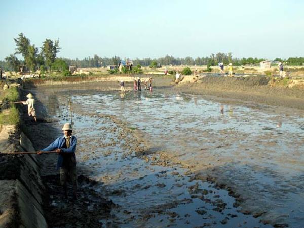 XL-Chuẩn bị ao và nguồn nước nuôi tôm sú