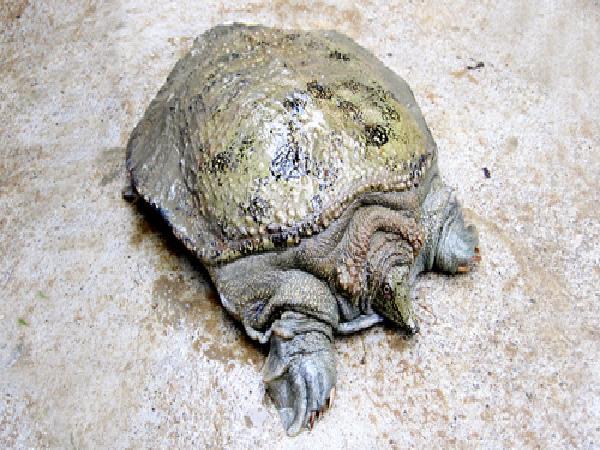 CB-Phòng, trị bệnh ở ba ba, rùa