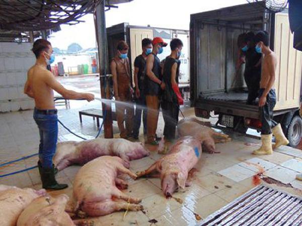 100% mẫu thịt heo, gà, vịt bị nhiễm khuẩn E.coli