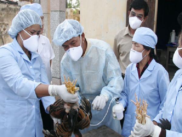 CB-Một số lưu ý khi sử dụng vaxin phòng bệnh cho gia súc, gia cầm