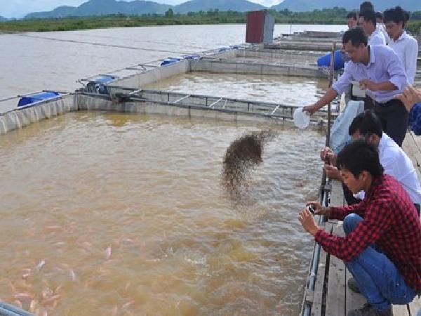NT-Kĩ thuật nuôi cá tra và cá basa trong bè: Giống và chọn giống