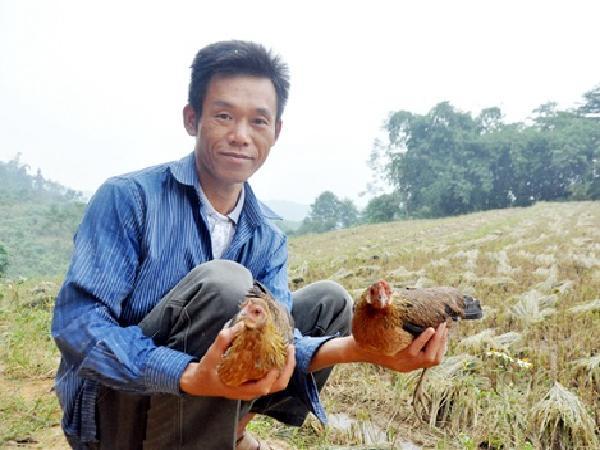 Kinh nghiệm thuần hoá và chăm sóc gà rừng