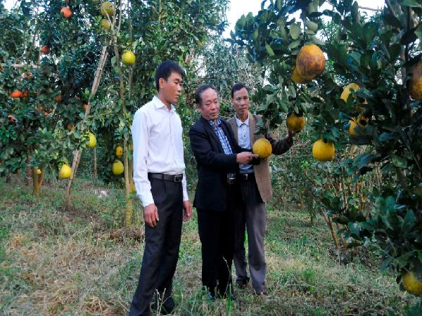 Phát triển kinh tế vườn bền vững theo hướng sản xuất hàng hóa