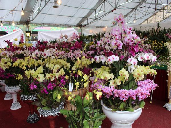 Hội chợ Xuân Mậu Tuất 2018 – Nơi hội tụ hương vị Xuân đất Việt