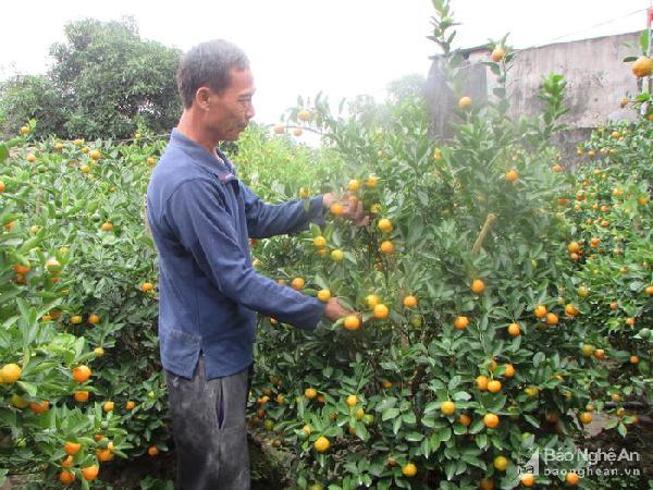 Nông dân chăm sóc đào, quất chuẩn bị bán Tết