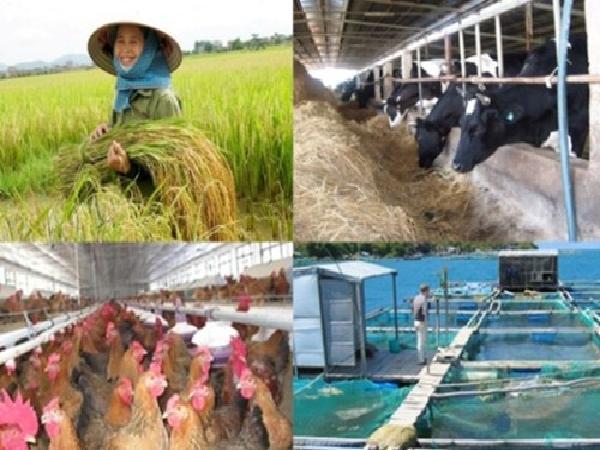 Nông dân vẫn thờ ơ với bảo hiểm nông nghiệp