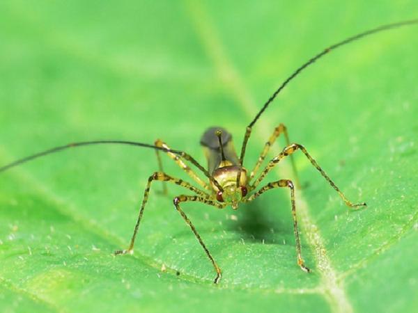 SB-Phòng trừ nhện đỏ và bọ xít hại cam quýt