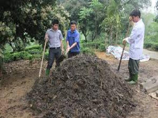 Sử dụng chất thải chăn nuôi làm phân bón hữu cơ