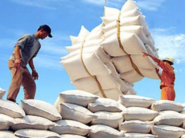 Đề xuất quy định về hợp đồng xuất khẩu gạo tập trung