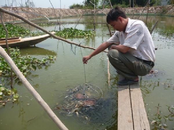NT-Một số lưu ý nuôi ghép cua đồng và cá chạch đồng