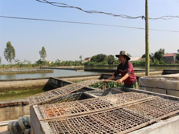 Nuôi ếch Thái và cá cá rô đồng lai trên diện tích 11.000m2, thu 3 tỷ đồng/năm