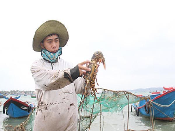 Mong có chính sách hỗ trợ người nuôi trồng thủy sản