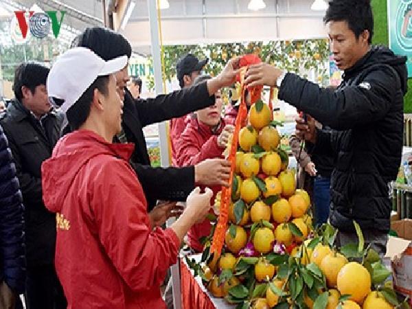 Nghệ An Tổ chức hội chợ cam Vinh