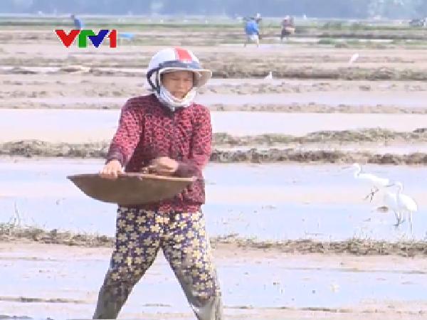 Hơn 2.000 ha lúa mới sạ tại Bình Định có nguy cơ mất trắng