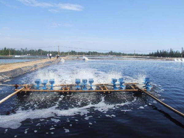 XL-Kiểm soát độ mặn, độ cứng và độ trong của nước hồ nuôi tôm