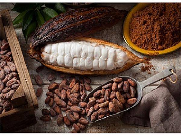 Hội chợ triển lãm về cacao, chocolate tại Hàn Quốc