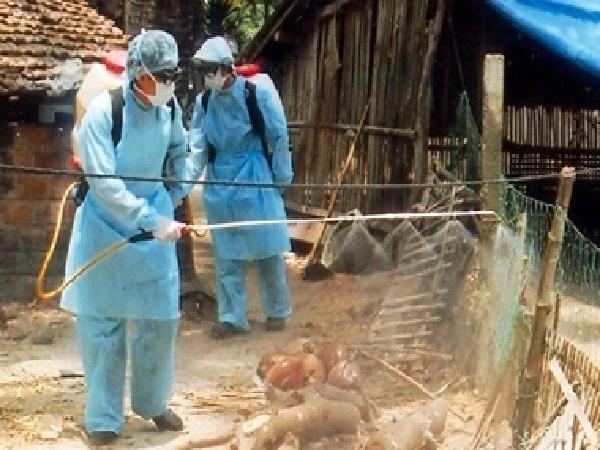 Chủ động phòng, chống dịch bệnh động vật trong dịp Tết Nguyên đán Mậu Tuất và Lễ Hội Xuân 2018
