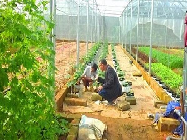 """Lão nông """"khùng"""" ném nửa tỷ đồng lên núi chỉ để trồng rau"""