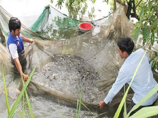 Tìm hướng đi cho sản xuất cá giống ở Đắk Lắk