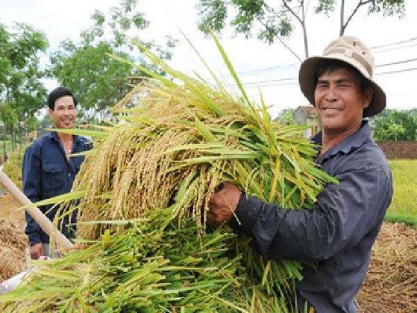 Nông dân có nguyện vọng được tham gia BHXH tự nguyện