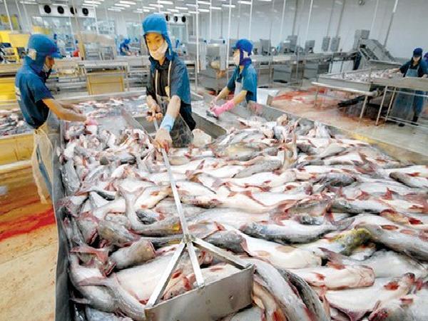 """Tôm, cá sẽ """"gánh"""" 9 tỉ USD cho ngành thủy sản năm 2018"""