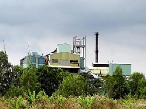 Nhà máy chậm thu mua, hàng nghìn ha mía sắp thành củi khô
