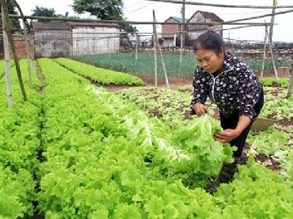 Cơ hội nào cho nông nghiệp hữu cơ?