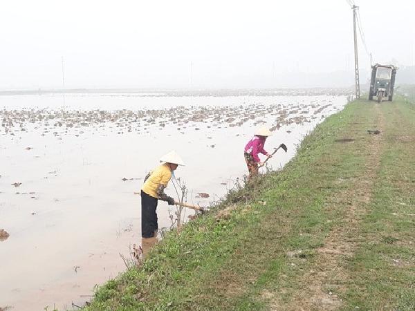 Khẩn trương khắc phục ô nhiễm nước tưới