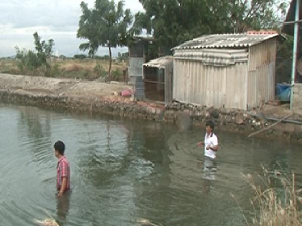 Ninh Thuận: Nhiều diện tích nuôi hàu thương phẩm ở huyện Ninh Hải có dấu hiệu bị bệnh
