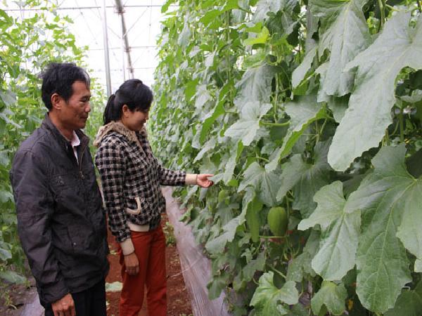 Huyện Cư M'gar chú trọng ứng dụng công nghệ cao trong nông nghiệp