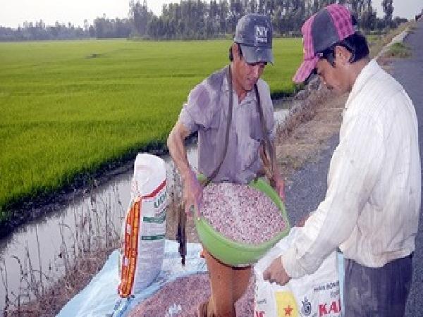 Phân bón giả gây thiệt hại kinh tế đối với người nông dân