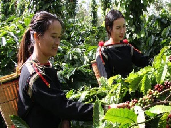 Hướng đến sản phẩm cà phê organic