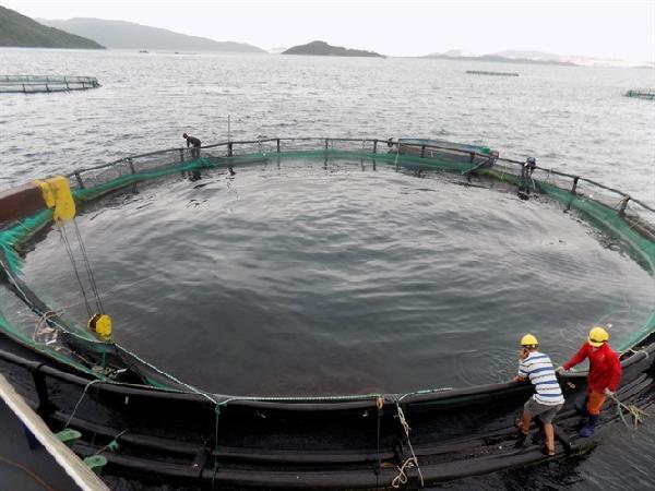 Nuôi cá biển theo công nghệ Na Uy
