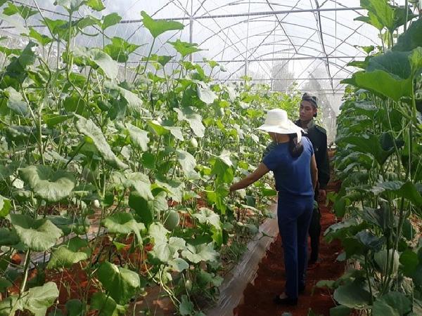 Quảng Trị: Nông nghiệp chất lượng cao sẽ mở ra hướng đi mới