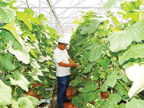 Thăm trang trại tiền tỷ của nông dân 8X