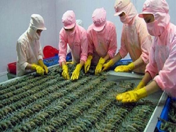 Đoàn doanh nghiệp Úc sang Việt Nam tìm hiểu về chuỗi sản xuất tôm xuất khẩu sang Úc