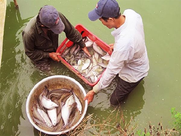 Tin vắn thủy sản địa phương đáng chú ý trong tuần