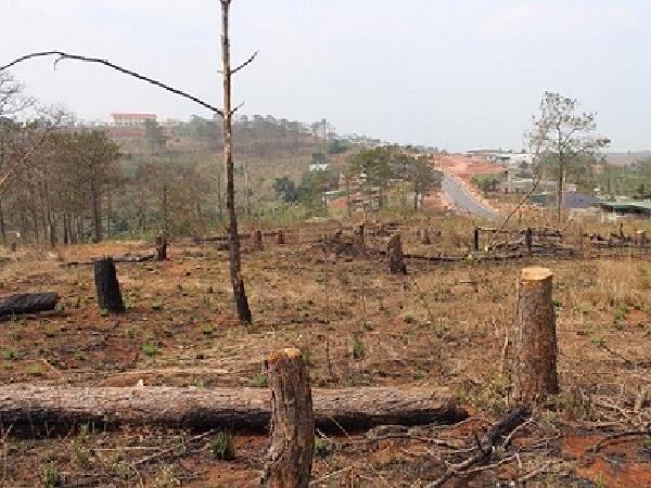 Xử phạt hành chính đối với hành vi lấn chiếm đất trồng rừng