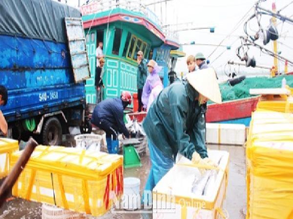 Thêm nhiều chính sách linh hoạt hỗ trợ ngư dân