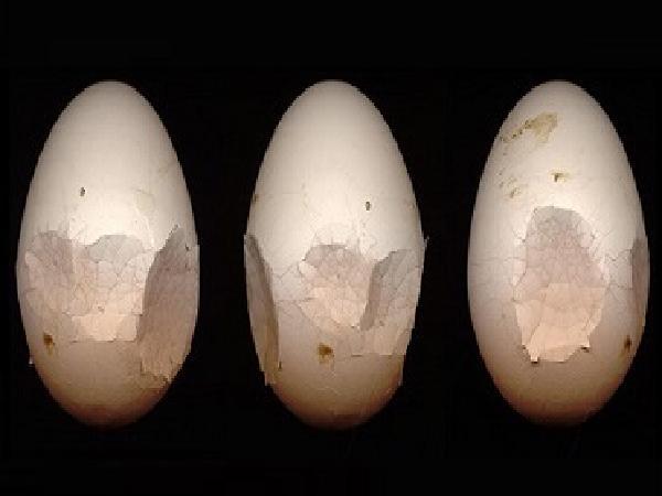 N-Biện pháp nâng cao tỷ lệ đẻ và chất lượng trứng gia cầm
