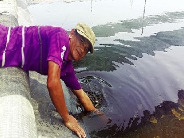 NT-Sử dụng mật rỉ đường trong hệ thống ao nuôi tôm không thay nước