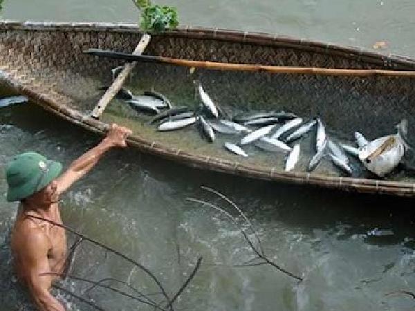 NT-Kỹ thuật nuôi cá đối mục thương phẩm trong ao đất