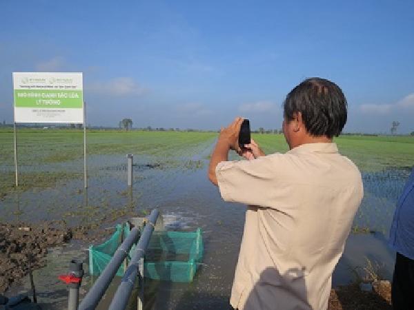 Sản xuất lúa thông minh, thích ứng với biến đổi khí hậu
